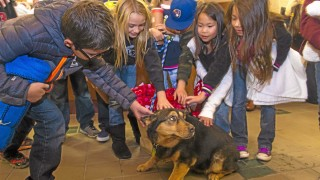 "Students from Golden Elementary in Fontana, play with Sheila, during a tour of the Rancho Cucamonga animal shelter, after they raised $390.11 in the ""Dog Gone Donations program"" and obtained blankets and towels for the animals, on Dec. 16, 2014. (Photo by Frank Perez/Correspondent)"