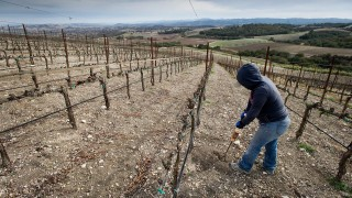 A worker aerates the ground around the vines at the Russell Family Vineyard, near Paso Robles in Napa Valley, part of California's wine-making region, which has experienced extreme drought.David Paul Morris/Bloomberg/Getty Images