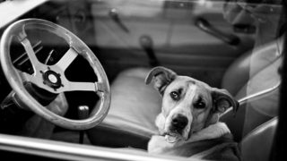 Assemblyman Marc Steinorth bill decriminalizing saving pets from hot cars passes state Senate