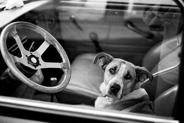 Assemblyman Marc Steinorth bill decriminalizing saving pets from hot cars passes state Senate