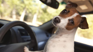 California to Allow Citizens to Rescue Dogs from Hot Cars - Assemblyman Marc Steinorth